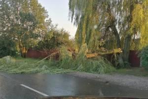 В Навле сильный ветер повалил на дорогу дерево