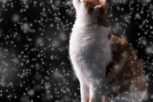 Брянцам в среду обещают снег и -6ºC