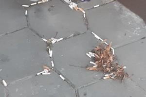 Вид разбросанных окурков лишил брянца дара речи