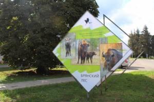 В Суземке установили стенды с фотографиями зверей и птиц заповедника «Брянский лес»