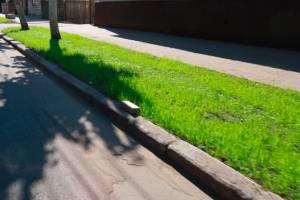 В Брянске на улице Фокина начали высаживать газоны