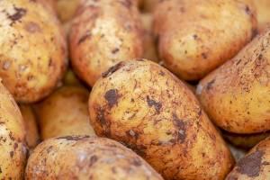 Брянский картофель обогнал в цене бананы и апельсины