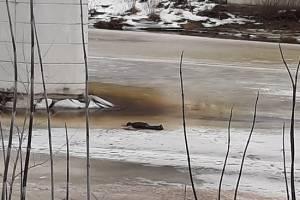 Под Тверью нашли мертвым уроженца Брянской области