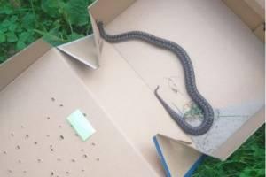 В Дятьково возле школы №3 поймали ядовитую змею