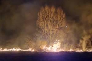 На Брянщине с начала года произошло 765 «травяных» пожаров