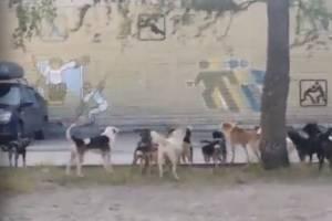 В Брянске многоэтажку на улице 2-я Мичурина оккупировала стая бродячих собак