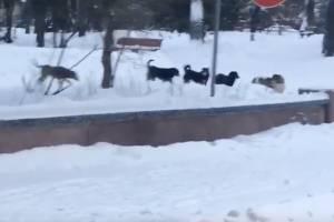 Депутатам Брянской областной Думы угрожает огромная стая собак