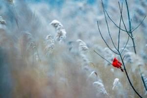 В Брянской области 23 февраля похолодает до -20