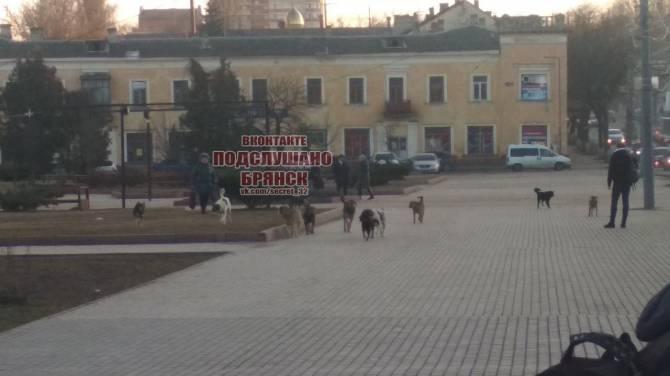 В Брянске на набережной злые собаки едва не загрызли людей