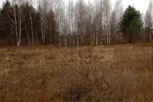 В Гордеевском районе более 200 гектаров сельхозземель заросло сорняками