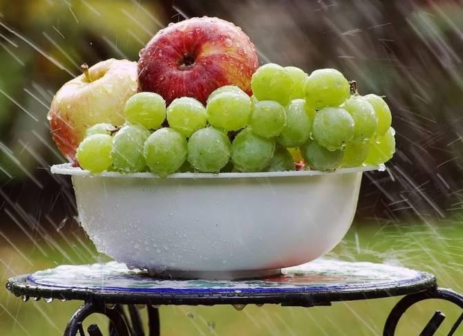 В Брянской области прогнозируют теплое воскресенье с небольшим дождем