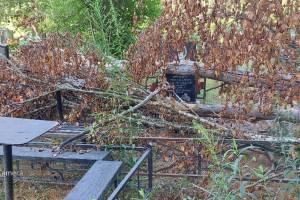 В Брянске на кладбище по Абашева рухнувшее дерево повредило памятники и ограды