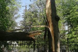 В центре Брянска упало дерево на машину