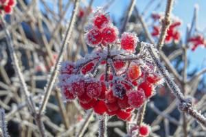 В субботу брянцам пообещали заморозки и мокрый снег