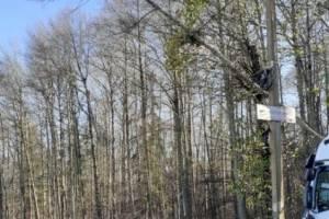 На въезде в Белые Берега сломанное дерево нависло над трассой