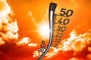 На Брянщине в пятницу прогнозируют адскую жару