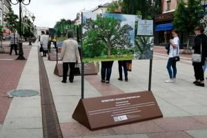 На бульваре Гагарина открылась фотовыставка «Путешествие по Брянскому краю»