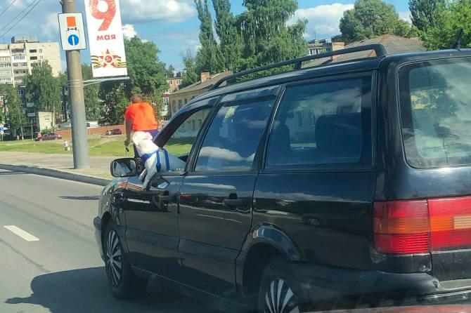 В Брянске сняли на фото Бобика за рулем