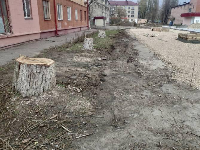 В Брянске у кинотеатра «Салют» спилили огромные деревья