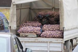 В Брянской области резко упала цена на картошку