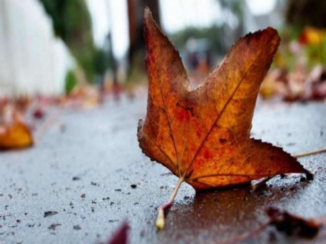 На Брянщине в понедельник ожидается дождь и до +12