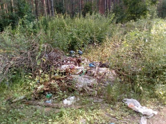 В лесу под Брянском нашли 14 незаконных свалок