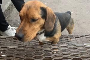 В Брянске ищут хозяев потерявшегося у ТЦ «Виват» пса