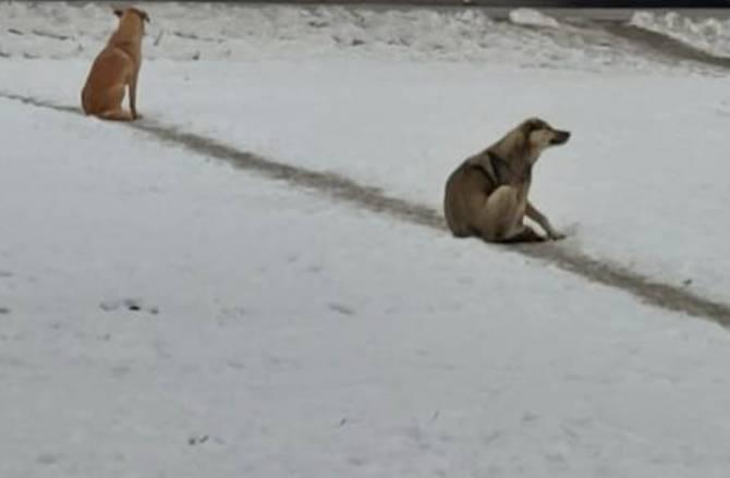 В центре Брянска собака напала на маму с маленьким ребёнком