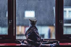 Брянцев на самоизоляции ждет очень дождливый июнь