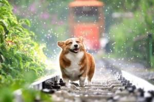 В субботу на Брянщине синоптики обещают +14ºC и дождь