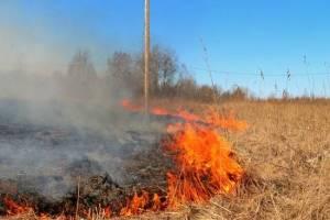 В Новозыбкове подожгли сухую траву
