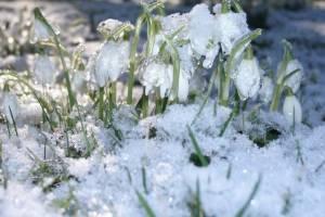 Синоптики пообещали брянцам сильное потепление к выходным
