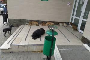 В Трубчевске стая бродячих собак захватила отделение Сбербанка