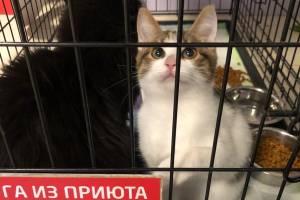 На выставке в Брянске нашли хозяев 11 бездомных кошек
