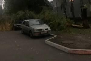 В Брянске рухнувшее дерево придавило легковушку