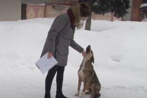 В Карачеве нашли фантастическое объяснение появлению бродячих собак
