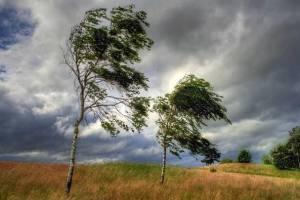 Брянцев предупредили о надвигающейся грозе и урагане