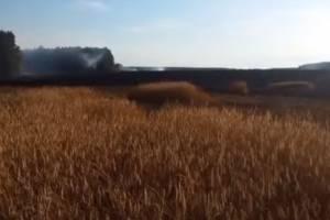 На Брянщине нашли уничтожившего лес на площади более 1 гектара поджигателя