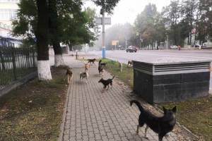 В центре Брянска сняли на фото стаю бродячих собак