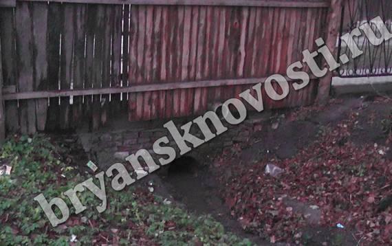 В Новозыбкове вода с целой улицы собирается в одном дворе