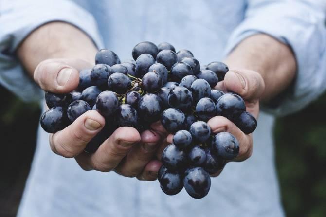 На Брянщину не пустили почти 20 тонн турецкого винограда