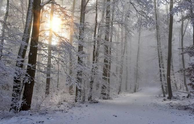 Первый понедельник 2021 года Брянщина встретит туманами и гололедом