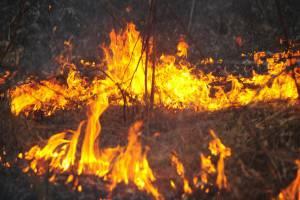 На Бряншине за месяц поймали 32 поджигателя сухой травы