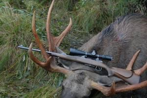 Брянский браконьер в лесу застрелил двух лосей