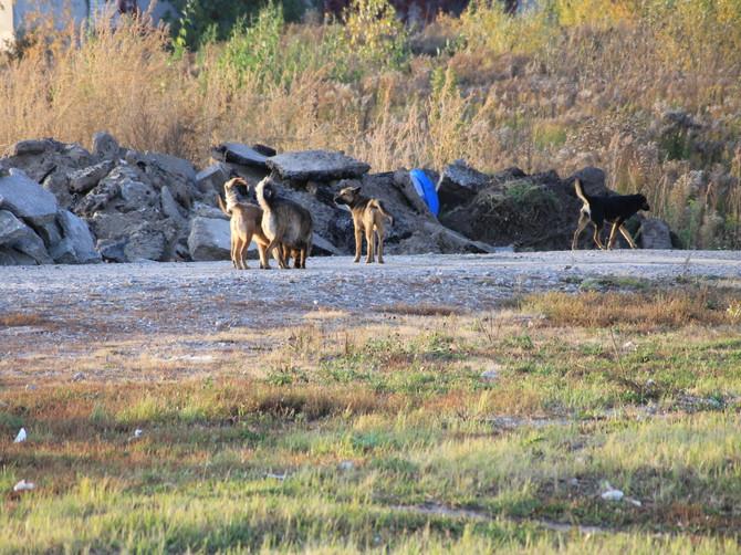 В Дятьково предложили свести бездомных собак к администрации