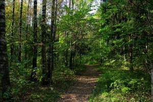 Брянская прокуратура обнаружила зеленые зоны без границ