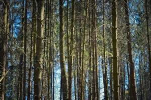 Брянские леса вновь открыли для посетителей