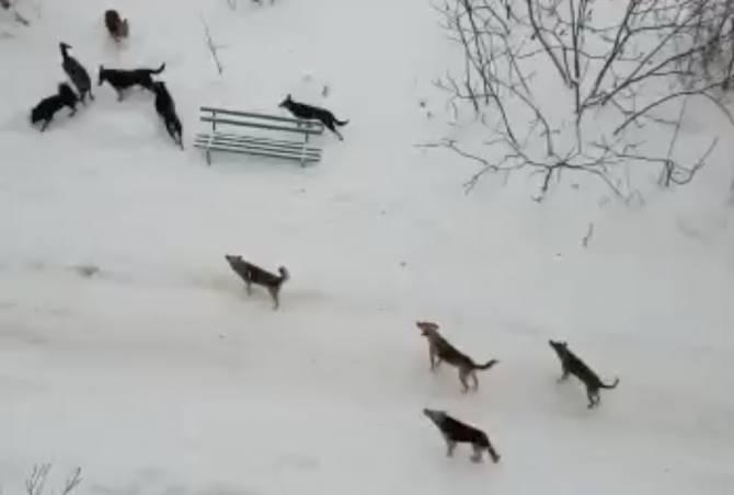 В Брянске стая бродячих собак взяла в заложники жителей многоэтажки