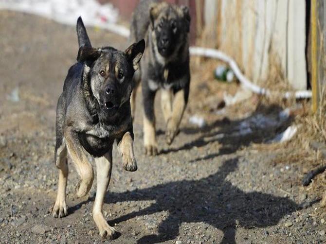 В Брянске на двухлетнего ребёнка с мамой напала стая собак