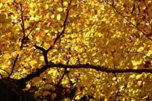 Минувший октябрь стал самым теплым в истории Брянщины